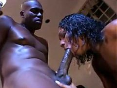 Crestfallen Black Girl Sucking Plus..